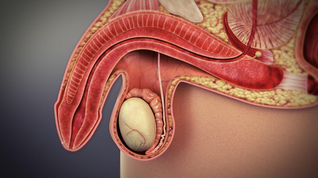 Jak często występują zaburzenia erekcji?