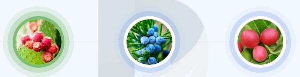 NanoVein - jakie składniki zawiera żel?
